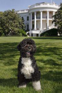 Obama's family dog